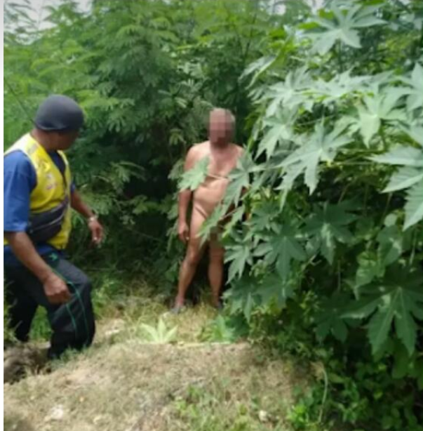 White Man Caught Having S£x With Pig Inside Bush – (Photo)