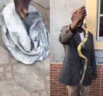 VIDEO: Pregnant Woman Dies After Snake Bite In Public Toilet